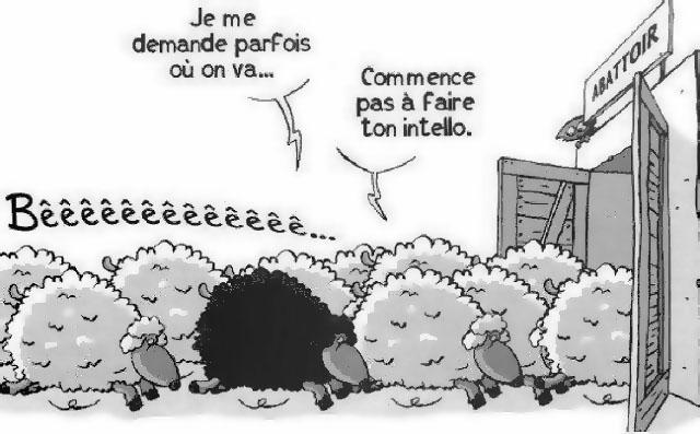 mouton noir citoyen